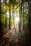 Haces del sol que brillan entre los árboles en la más forrest Fotos de archivo