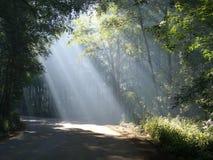 Haces luminosos en un bosque Fotografía de archivo libre de regalías