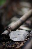 Hacha de mano cherokee Imagen de archivo libre de regalías