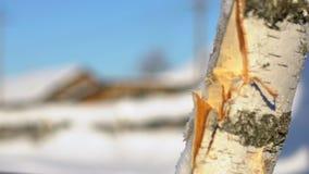 Hacha que taja el registro Tajar la madera en el invierno Astillas de la madera almacen de video