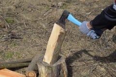 Hachage du bois avec une hache photos libres de droits