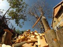 Hache en plaque de découpage et bois de chauffage Photo libre de droits