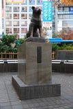 Hachiko умерло 8-ого марта 1935, и было найдено на улице в Shib Стоковая Фотография RF