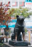 The Hachiko dog statue at Shibuya station in Tokyo, Japan. The Hachiko dog statue at Shibuya station in Tokyo royalty free stock photos