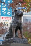 Hachikostandbeeld in Shibuya, Japan royalty-vrije stock foto's