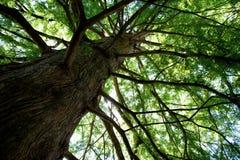 Hacia el cielo árbol Fotos de archivo
