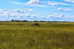 Hacia fuera al pasto Imagen de archivo libre de regalías