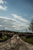 Hacia fuera aquí en los campos Foto de archivo libre de regalías