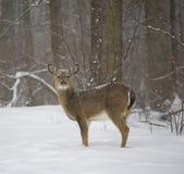 Hacia fuera en la nieve Imagen de archivo
