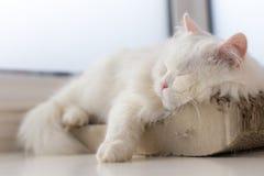 Hacia fuera enfriado gato que toma una siesta en su punto preferido por la ventana Foto de archivo libre de regalías