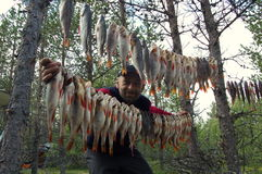 Hacia fuera percas saladas colgadas pescador antes de fumar Fotografía de archivo libre de regalías