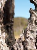 Hacia fuera tronco de árbol quemado depresión Fotos de archivo