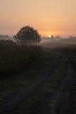 Hacia vertical del amanecer Foto de archivo