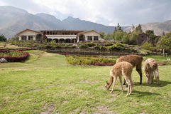 Hacienda péruvienne photos libres de droits