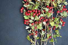 Hackberries στο σκοτεινό υπόβαθρο Στοκ Εικόνες