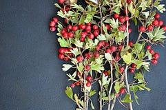 Hackberries sur le fond foncé Photo stock