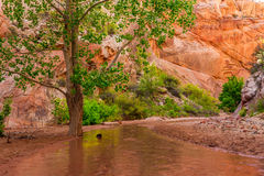 Hackberry Canyon stock image