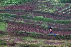 Hackende Landwirte lizenzfreies stockfoto