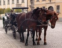 Hackney Horses. Two hackney horses in Wroclaw (Breslau), Poland stock photos