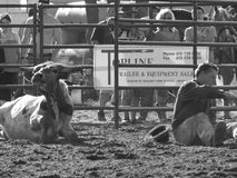 Had enough of each other. Rodeo Chesterville, Ontario,Canada weekend of June 19, 2011 Royalty Free Stock Photos