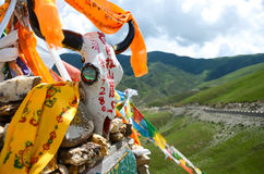 Hada and the cow skull in Tibet Royalty Free Stock Photos