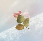 Hada del invierno stock de ilustración
