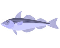 Haddock Royalty Free Stock Photography