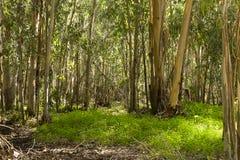 Hadera skog Israel Arkivfoto