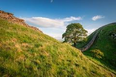 Hadrian`s Wall at Sycamore Gap Royalty Free Stock Image