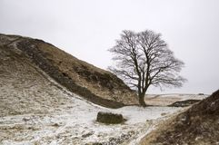 Hadrians Wall. Sycamore Gap at Hadrians Wall, Northumberland in the winter Royalty Free Stock Photography