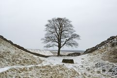 Hadrians Wall. Sycamore Gap, Hadrians Wall, Northumberland in the winter Stock Photos