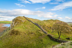 Hadrians Wall featuring the iconic sycamore gap. This iconic tree was used as a location in the film Robin Hood Prince of thieves, and is a notable point in the Stock Photo