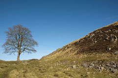 Hadrians Wall Sycamore Gap Stock Photos