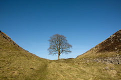 Hadrians Wall Sycamore Gap. Sycamore gap, Hadrians Wall in Northumberland Stock Images