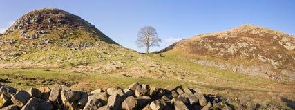 Hadrians Wall Sycamore Gap panorama Stock Image