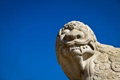 Haechi die, tegen een Blauwe Hemel omhoog kijkt Stock Afbeelding