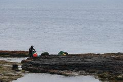 Haenyo-Frau, die Schalentiere, Jeju-Insel, Südkorea erntet lizenzfreies stockfoto