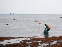 Haenyo woman harvesting shellfish, Jeju Island, South Korea. Haenyo diver woman harvesting shellfish and seaweed with boat at the back, Jeju Island stock photo