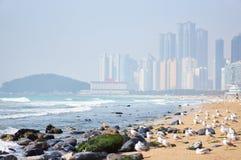 Haeundae beach. With birds in Busan Stock Photos