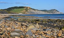 Hafen Lyme Regis Lizenzfreie Stockfotografie