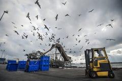 Hafenarbeiter in den Hel lizenzfreie stockfotos
