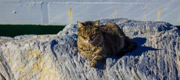 Hafenkatzen aalen sich in der Sonne Lizenzfreie Stockfotos