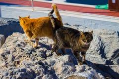 Hafenkatzen aalen sich in der Sonne Lizenzfreie Stockbilder
