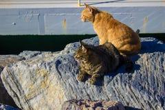 Hafenkatzen aalen sich in der Sonne Lizenzfreies Stockfoto