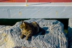 Hafenkatzen aalen sich in der Sonne Stockfotos