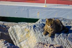 Hafenkatzen aalen sich in der Sonne Lizenzfreies Stockbild