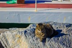 Hafenkatzen aalen sich in der Sonne Stockbild