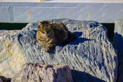 Hafenkatzen aalen sich in der Sonne Lizenzfreie Stockfotografie