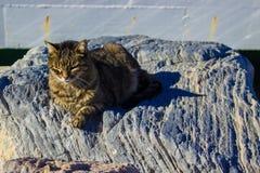 Hafenkatzen aalen sich in der Sonne Stockfotografie