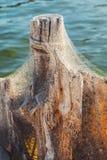 Hafenpfosten im Spinnennetz Stockfotografie
